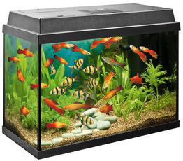 Fish Tanks and Aquaria